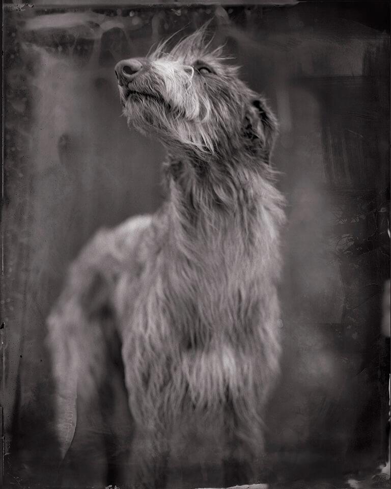 Bog-Dog-2014