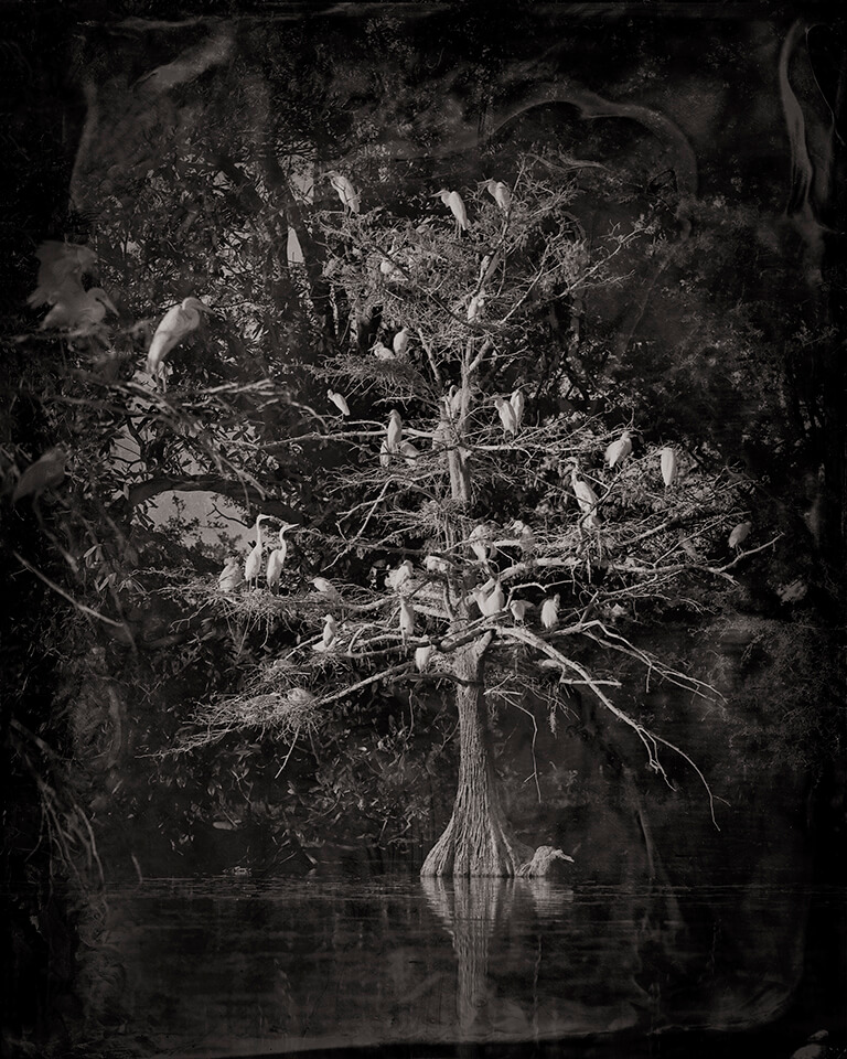 Nesting-Tree-2012-1